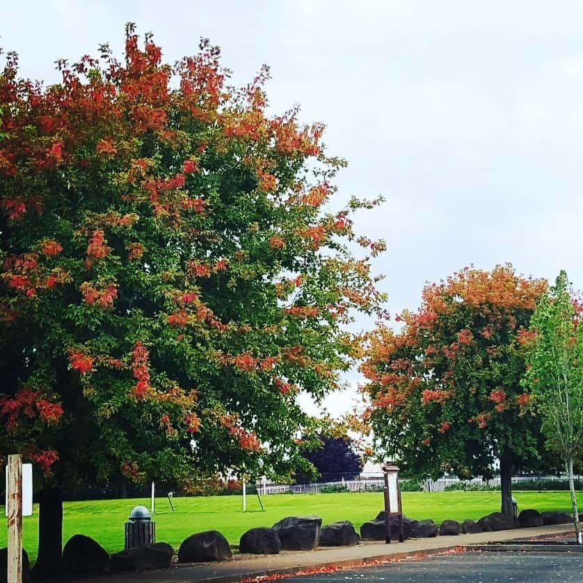 Bring it on fall!    fall autumn leaveshellip